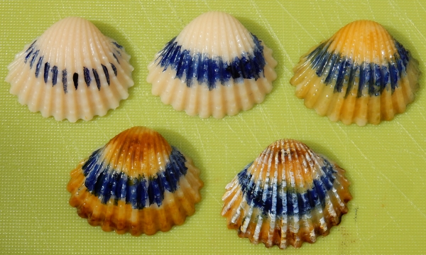 small cockle shell painting